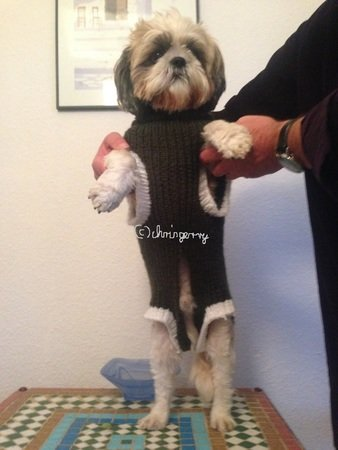 Strickanleitung Hundemantel, Hundepullover Beany Gr. XL