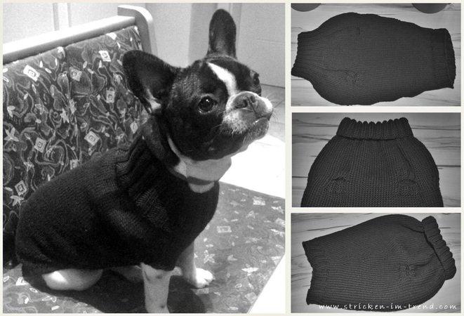 Pullover Für Den Hund Stricken Diy Pulli