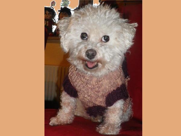 HUNDEPULLOVER MIT RUCKSACK - hippe Hunde frieren nicht, wenn es kalt ...