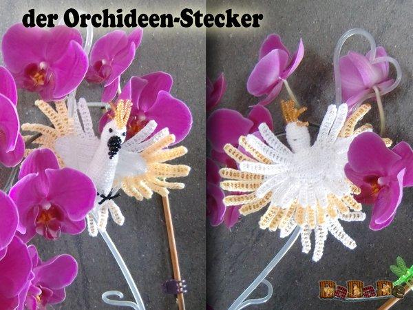 Welche Blumen Bl Hen Im September orchideen blühen nicht orchideen bl hen nicht im handumdrehen das problem beheben blume ideal