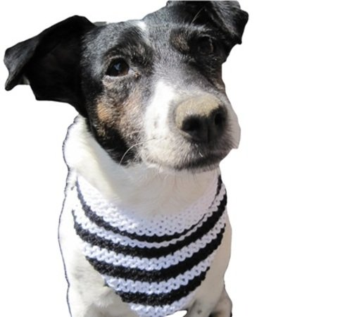 strickanleitung hundehalsband hundetuch f r hunde mittlerer gr e zum knoten mit knopf oder. Black Bedroom Furniture Sets. Home Design Ideas