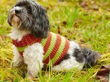 Hunde Pullover Häkeln Pulli Für Hunde Diy