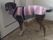 Strick Und Häkelanleitung Hundemantel Hundepullover Jeany Gr Xl