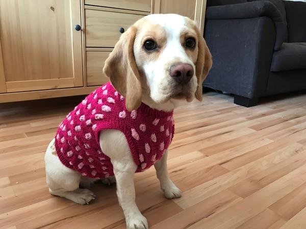 Strickanleitung für Hundepullover