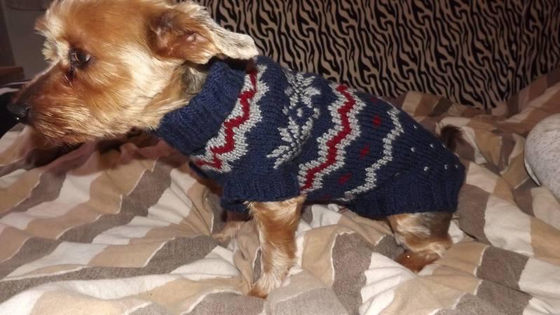 Strickanleitung für einen Hundepulli im Norwegermuster