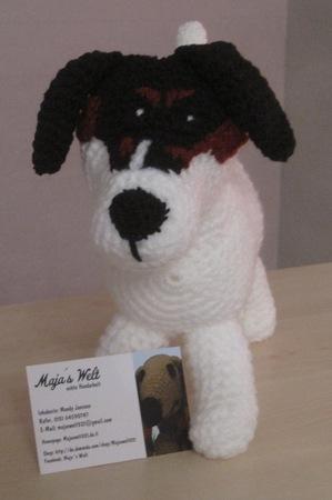Jack Russel Terrier Dame Phibi