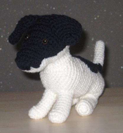 Jack Russel Terrier Rüde Blacky