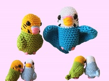 Small budgies (sitting & flying)