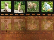 Design A Simple Filmstrip In Photoshop