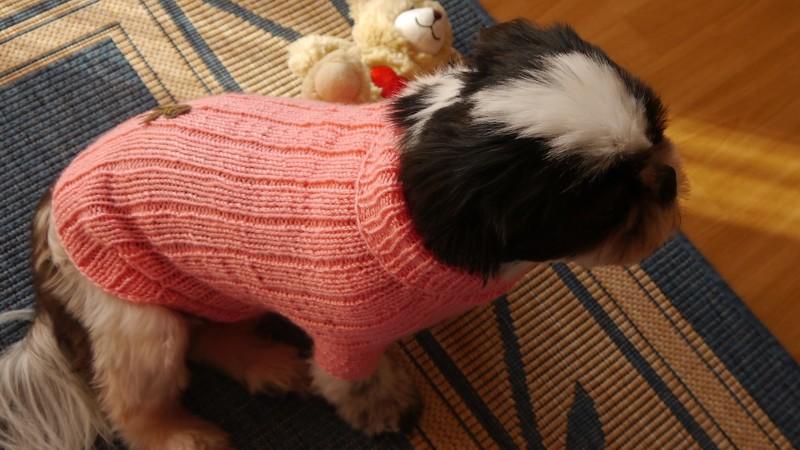 Hundepullover stricken - Anleitungen auf Crazypatterns.net