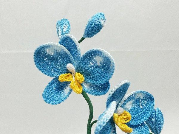 Blume Häkeln Pflanze Orchidee