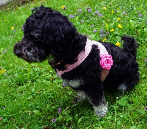 Häkelanleitung Hundegeschirr optional mit hübscher Rose (für kleine ...