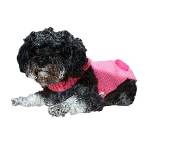 Häkelanleitung Hundemantel mit Kapuze ideal für kleine Hunde und ...
