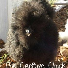 TheCre8iveChick Avatar